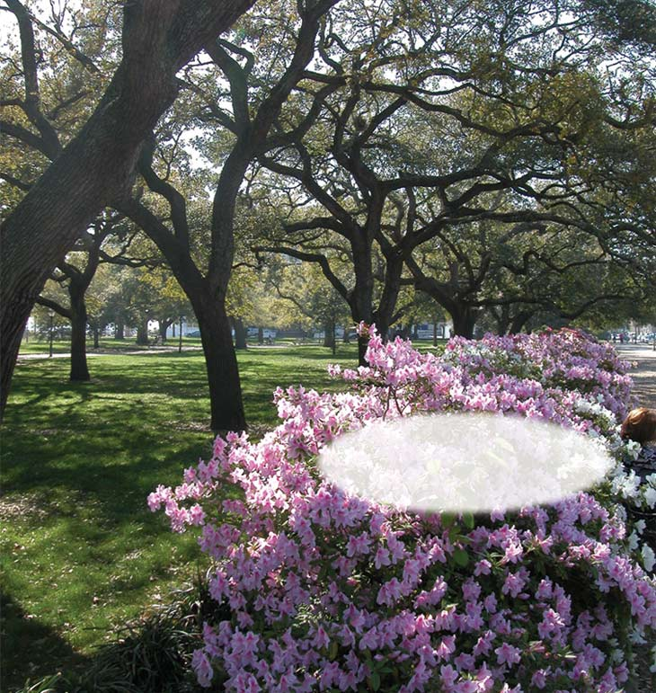 From Charleston`s Battery to Summerville`s Azaleas